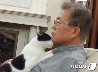 문재인 대통령이 지난 27일 오후 트위터를 통해 고양이 '찡찡이'가 자신의 품에 안긴 사진을 올렸다.(문 대통령 트위터) 2017.5.27/뉴스1 © News1 이광호 기자