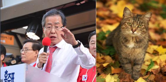 홍준표 자유한국당 대선 후보가 3일 오후 부산 중구 남포동 비프광장 유세를 하고 있다. 송봉근 기자