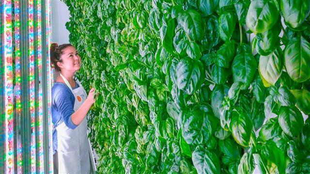 미국의 '버티컬 파밍' 스타트업 플렌티가 재배하는 식물들.출처 플렌티