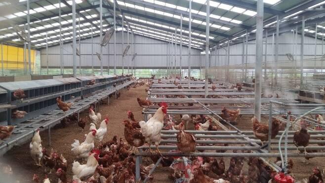 정진후씨는2012년경남하동의양계농장으로국내에서 처음으로 동물복지인증을받았다.이후경남합천에서도자유방목형양계농장을열었다.  정진후씨제공