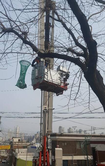 나무에 매달린 길고양이 구조하는 소방관 [인천 중부소방서 제공]