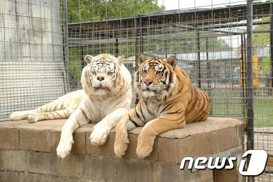 케니(왼쪽)와 케니의 형제인 '윌리(Willie)'' (오른쪽). 윌리 역시 심각한 사시를 앓고 있다.  (터펜타인 크릭 야생동물보호지구)