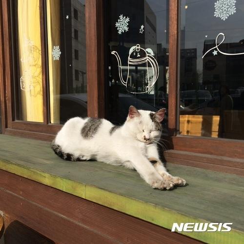 【서울=뉴시스】강동구의 한 카페 앞에서 햇볕을 쬐고 있는 길고양이.  (사진 = 강동구 제공)  photo@newsis.com