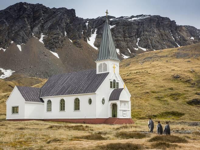 우수상에 뽑힌 '옷을 차려입고 교회에 가다'. (이하 사진들은 우수상) 칼 헨리가 남극에서 가까운 사우스조지아섬 그리트비켄의 한 교회 앞에서 찍었다. 일요일 오전 마치 황제펭귄이 경건한 마음으로 교회에 가는 것 같다.