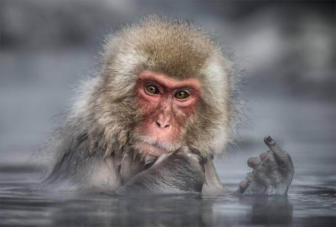 """린다 올리버 야마모토가 일본 나가노 근처의 지고쿠다니 야생원숭이 공원에서 찍은 '명확한 메시지를 보냈어'.  """"사진가 몇 명이 많은 관광객이 있는 혼잡한 상황에서 사진을 찍고 있었다. 나는 원숭이가 우리에게 보낸 메시지로 생각하고 싶었다. 이렇게 우리는 의인화해서 생각하지만, 사실은 이 원숭이는 손가락을 다친 것 같았다."""""""