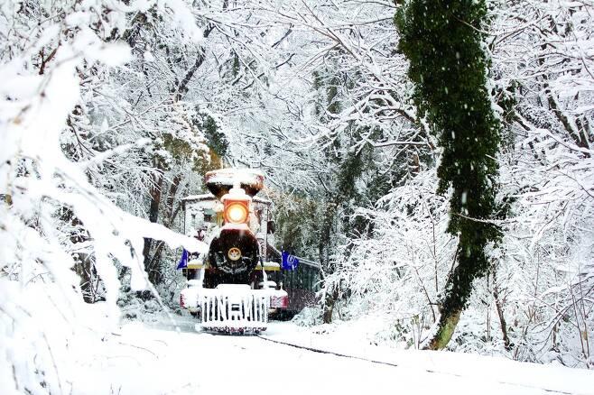 제주 에코랜드에서 눈덮힌 곶자왈 속을 기차가 달리고 있다.                                      에코랜드 제공