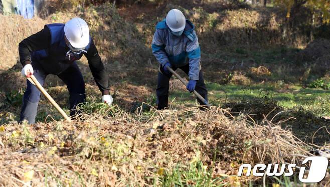 발굴 작업 모습. /뉴스1DB © News1