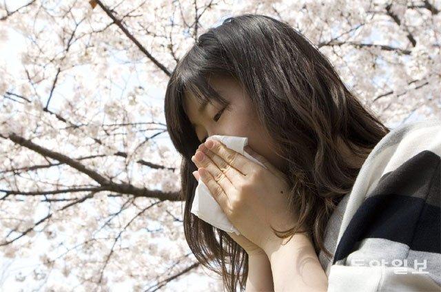 알레르기의 계절이 돌아왔다. 봄철 꽃가루로 비염과 결막염, 천식 등이 악화되는 이들이 적지 않다. 그대로 방치하면 수면장애, 만성피로로 이어질 수 있는 만큼 건강관리에 유념해야 한다. 동아일보DB