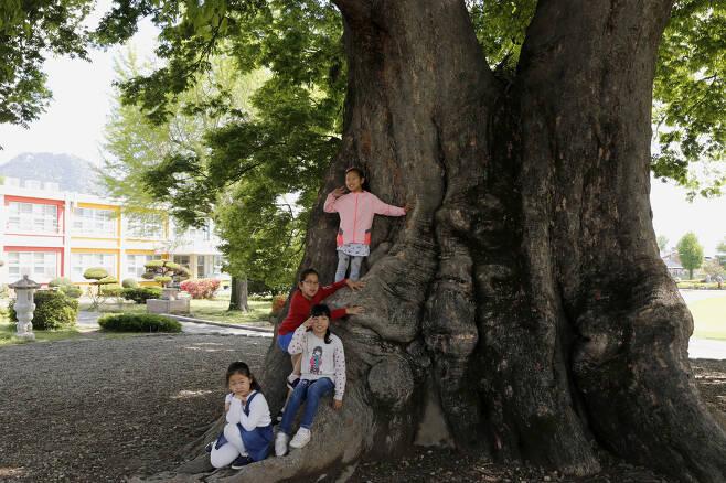 나무를 타고 노는 초등학생들. 사진기를 들이대자 나뭇잎처럼 싱그러운 웃음을 지어 보이며 자세를 취해준다. ⓒ이돈삼