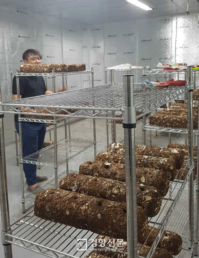 인천 미추홀구 용현 1·4동 옛 주민센터 2층 표고버섯 도시농장에서 한 청년이 배양기의 버섯 상태를 살펴보고 있다.