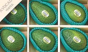 롯데마트가 추석 선물세트로 처음 선보인 뉴질랜드산 아보카도. 롯데마트 제공