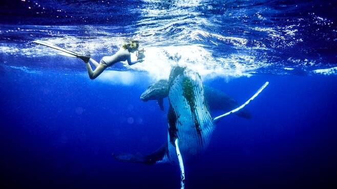 최송현씨가 모레아 섬 근처에서 혹등고래를 촬영하고 있다. 사진 최송현 제공