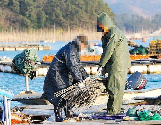 지난해 말 전남 완도의 매생이 양식장에서 일하는 동남아 국적 불법체류자들이 어구를 정리하고 있다. [프리랜서 장정필]