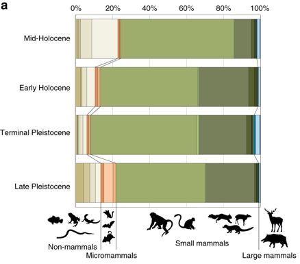 호모 사피엔스가 살았던 스리랑카 파 히엔 동굴에서 나온 동물 뼈를 동물ㆍ시대별로 구분한 표. 약 4만년 전인 홍적세 후기(Late Pleistocene) 동물 뼈 중에서 원숭이 뼈가 48.7%를 차지했다. 열대 우림에 정착한 호모 사피엔스가 원숭이를 주식으로 삼았다는 뜻이다.