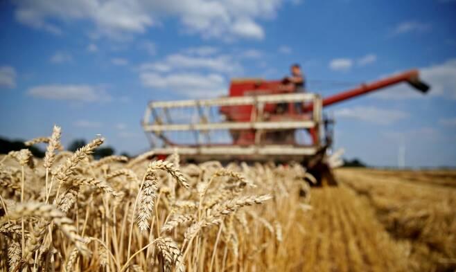 밀을 수확하고 있는 농부 로이터