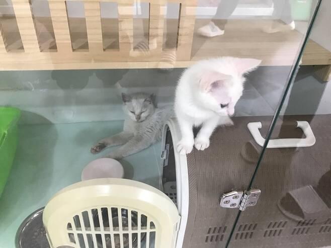 서울시 고양이입양카페의 고양이들.