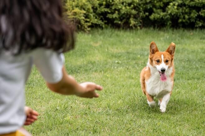 개들에게 자기공명영상 장치 안에서 함께 사는 사람 냄새, 함께 사는 개 냄새, 낯선 사람 냄새, 낯선 개 냄새를 맡도록 한 결과, 뇌 안쪽 깊숙한 곳에 있는 미상핵이라는 영역은 함께 사는 사람에게만 강한 활성화 반응을 보였다. 게티이미지뱅크