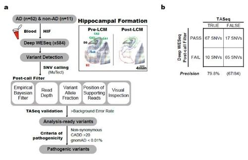 연구에서 사용된 체성 유전변이 분석 파이프라인 [KAIST 제공. 재판매 및 DB 금지]