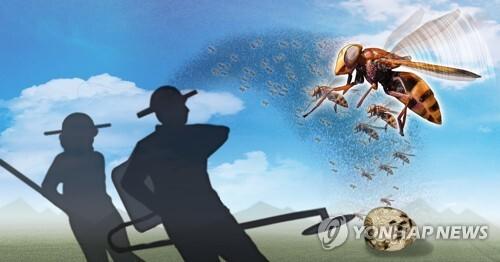 벌초ㆍ제초작업 중 벌 피해 (PG) [정연주 제작] 사진합성·일러스트