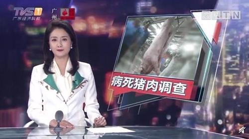 중국 광둥성서 '질병으로 죽은 돼지' 도축·유통 파문 [중국매체 TVS 보도 화면 캡처]