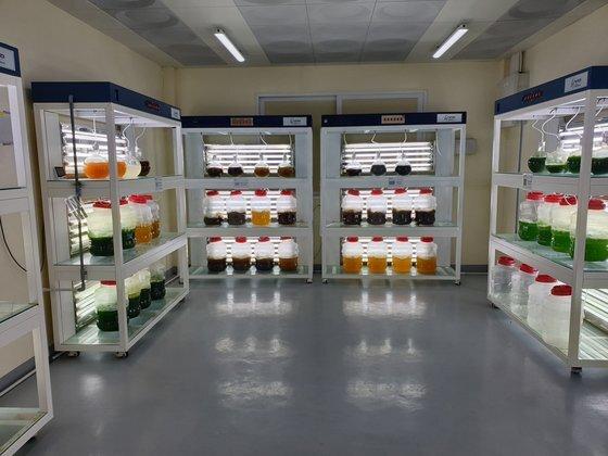 오징어 먹이에 쓸 플랑크톤을 배양 중인 동해수산연구소 연구실. [중앙DB]