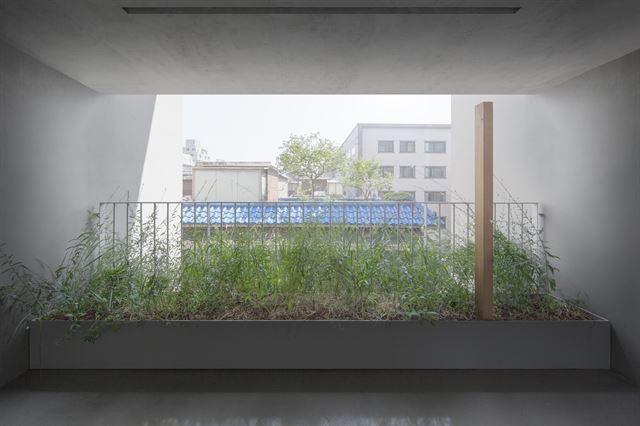 유일주택의 2층 복도에서 바라본 이웃집 옥상의 감나무 풍경. 층마다 보이는 풍경이 달라 거주자들은 산책하듯 계단을 오르내린다. 김주영(studio millionroses) 건축사진작가