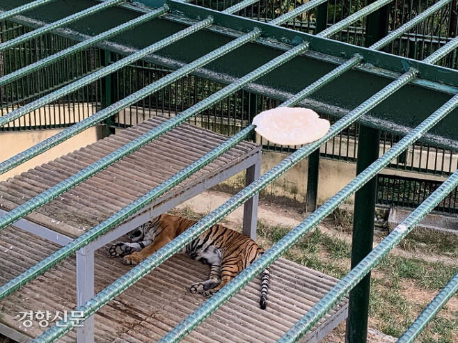 관람객이 호랑이를 높은 곳에서 내려다보도록 되어있는 구조의 진주 진양호동물원 호랑이사. 사육장 창살 위로 관람객이 던진 과자가 보인다.