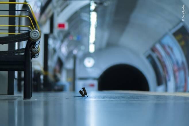 지하철역의 결투. 영국 자연사박물관 제공