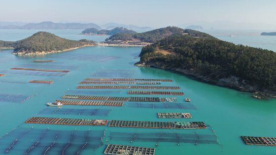 전남 완도군의 다시마 양식장. 완도는 국내 다시마 중 70% 이상이 생산되는 최대 해조류 산지다. 프리랜서 장정필