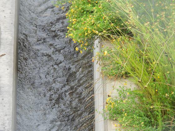 소백산 죽령터널의 지하수 배수로. 지난 25일 경북 지역에는 비가 거의 내리지 않았으나 지하수 유출 때문에 철로 옆 수로에는 물에 빠르게 흐르고 있다. 강찬수 기자
