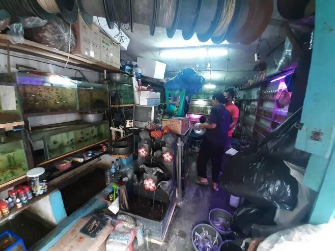 4평 남짓한 공간에 50종·2천 마리의 물고기 보유 [자카르타=연합뉴스]
