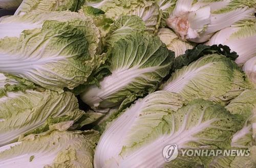 인도네시아, 한국산 팽이버섯 이어 배추 종자 1.5t 폐기명령 [연합뉴스 자료사진]