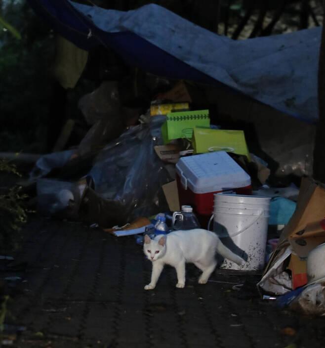 텐트촌의 또다른 주민 길고양이. 가난은 이 거대한 도시에 길고양이처럼 숨어 있다. 이정아 기자
