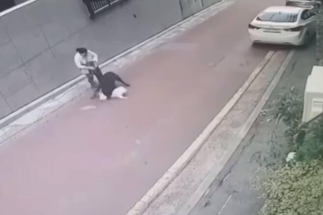 지난 25일 서울 은평구 불광동의 한 골목길에서 입마개를 하지 않은 맹견 로트와일러가 주민과 산책 중이던 소형견 스피츠를 물어 죽였다. 2020.7.31