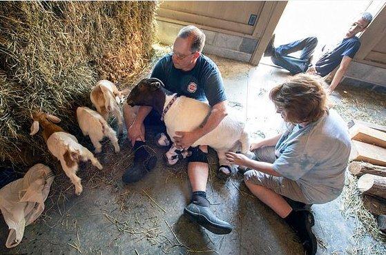 안나와 레니 유어스(안나를 안고 있는 사람), 그의 아내 미셸 유어스가 안나가 돌보는 염소 세쌍둥이를 바라보고 있다. [트위터 캡처]
