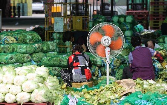 지난달 14일 서울 송파구 가락농수산물종합도매시장에서 상인들이 배추를 정리하고 있다.   역대 가장 긴 장마와 폭우 피해로 농산물 가격이 큰 폭으로 오른 것으로 나타났다. [연합뉴스]