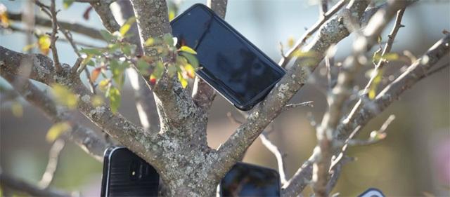 미국 대표 유통업체 아마존의 식료품몰 '홀푸드마켓'의 시카고 점포 앞 나무에 택배 기사들의 스마트폰들이 아슬아슬하게 매달려 있다. 트위터 캡처