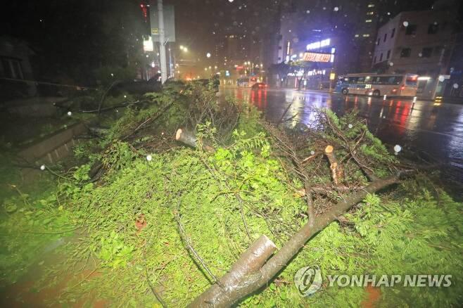 강풍에 꺾인 가로수(사진은 기사 내용과 무관) [연합뉴스 자료사진]