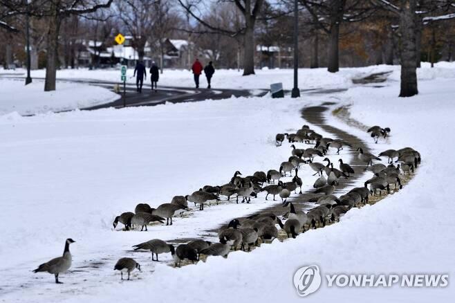2019년 눈이 쌓인 덴버 시내 모습 [EPA=연합뉴스 자료사진]