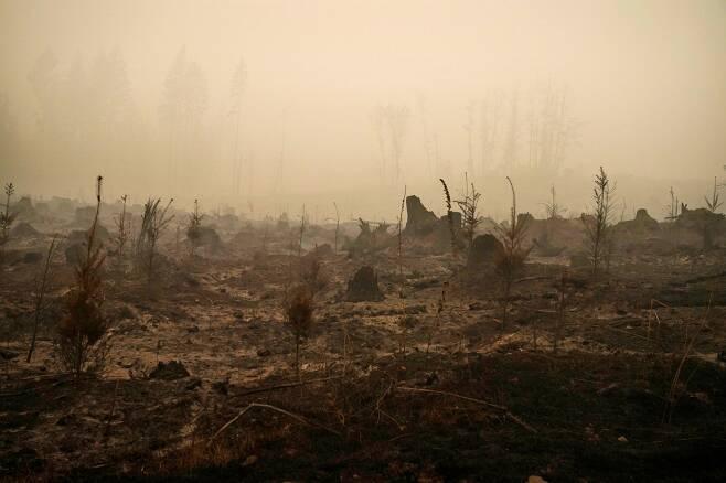 미국 역사상 최악의 산불로 폐허가 되고 있는 캘리포니아와 오리건 주 숲 일대