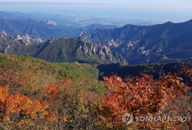 단풍 옷 갈아입기 시작한 설악산 [설악산국립공원사무소 제공·연합뉴스 자료사진]