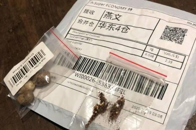 중국발 '정체불명 씨앗' 지구 반대편 브라질까지 배송…약 200건 확인(사진=가브리엘 자펠라 독자 제공)