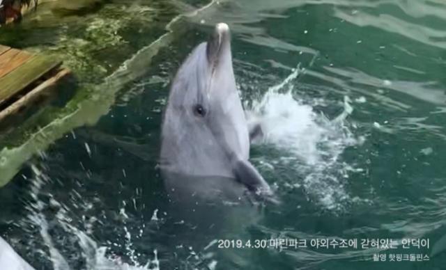 8월 폐사한 게 뒤늦게 확인된 큰돌고래 안덕. 핫핑크돌핀스 제공