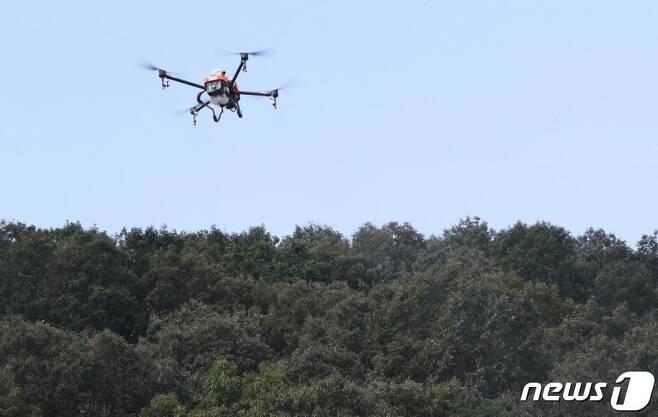 지난달 9월 4일 대전 유성구 국립대전숲체원 일원에서 중부지방산림청 관계자들이 드론을 활용한 항공방제를 실시하고 있다. /사진=뉴스1