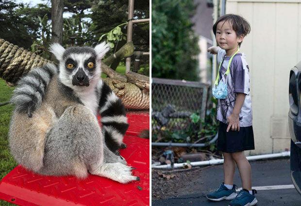 미국의 5살 어린이가 멸종위기 여우원숭이 납치 사건을 해결했다./사진=AP 연합뉴스