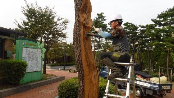 식물보호기술자가 병든 나무를 치료하고 있다. [사진 산림청]