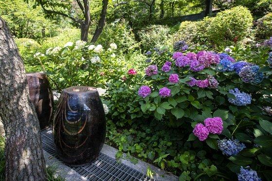 한국 항아리와 수국이 어우러진 정원. 한국과 영국의 아름다움을 잘 녹여낸 정원이다. 장진영 기자