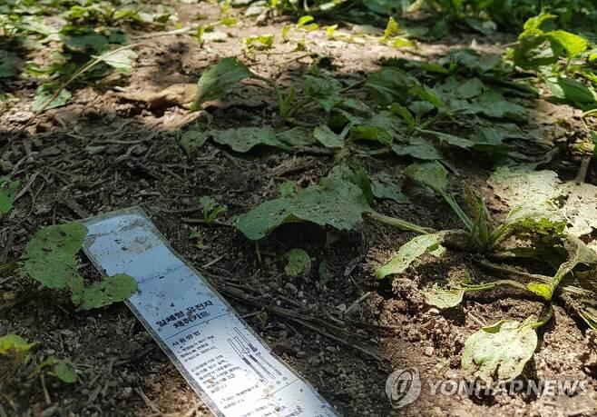 '묻지마 살인' 사건이 일어난 인제 등산로 입구 [연합뉴스 자료사진]