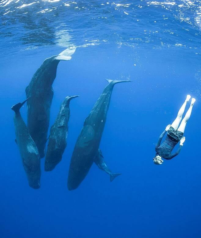 인도양에서 향유고래와 함께 헤엄치는 다이버와 사진작가 일행