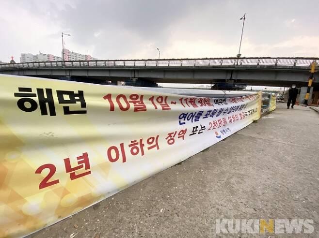 [강릉=쿠키뉴스] 강은혜 기자 =강원 강릉시 남대천 인근에 연어의 불법 포획을 금지한다는 현수막이 설치돼있다.